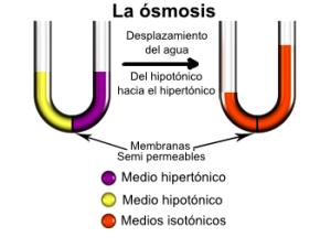 Osmose2-es